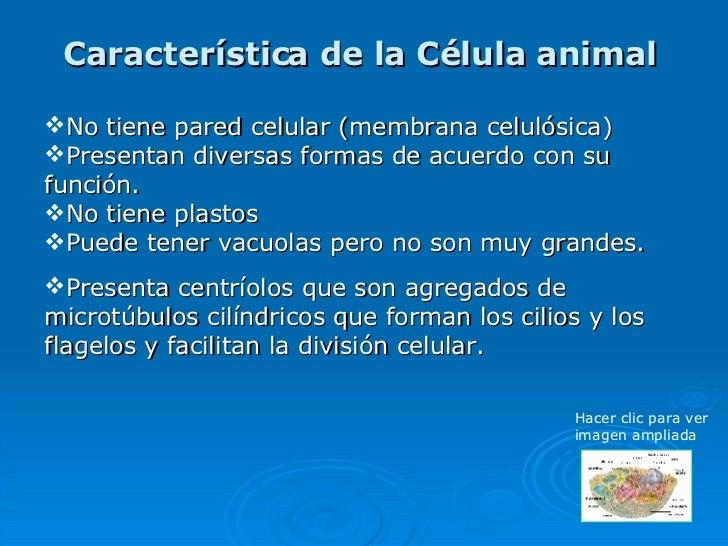Celulas vegetal y animal - Informacion sobre la fibra vegetal ...