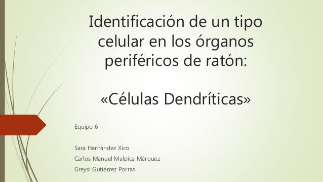 Identificación de un tipo  celular en los órganos  periféricos de ratón:  «Células Dendríticas»  Equipo 6  Sara Hernández ...