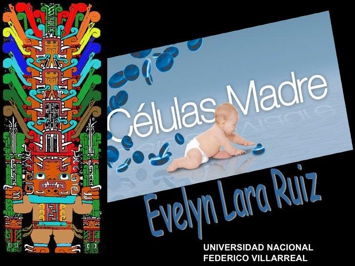 Evelyn Lara Ruiz UNIVERSIDAD NACIONAL FEDERICO VILLARREAL