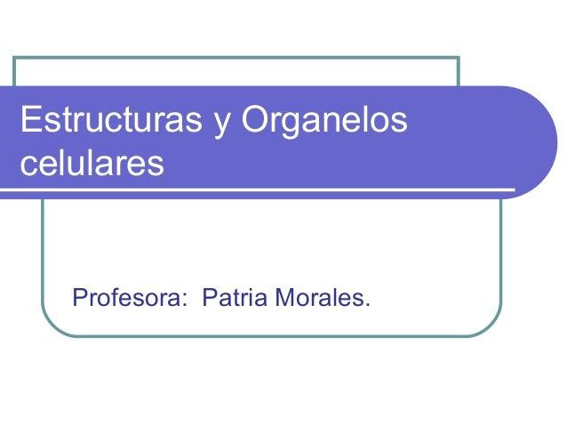 Celulas Organelos Y Estructuras