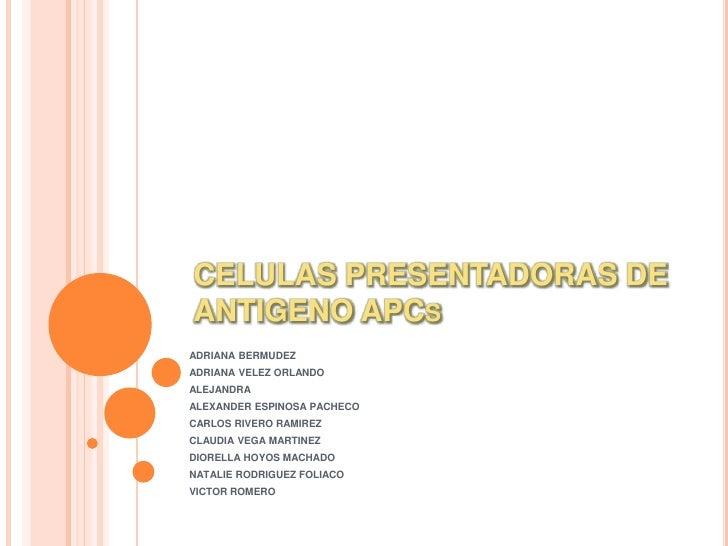 CELULAS PRESENTADORAS DE ANTIGENO APCs<br />ADRIANA BERMUDEZ<br />ADRIANA VELEZ ORLANDO<br />ALEJANDRA<br />ALEXANDER ESPI...