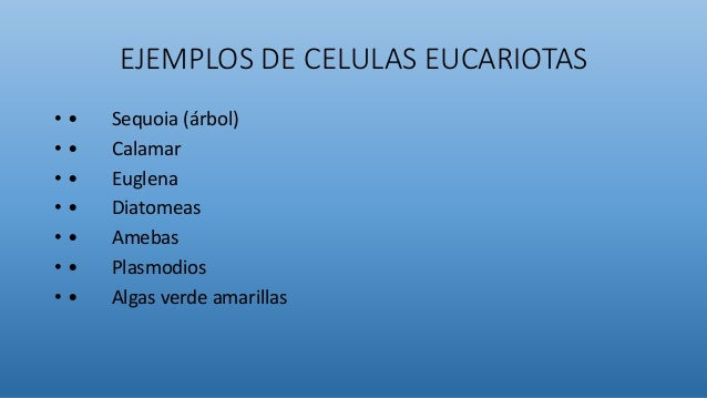 EJEMPLOS DE CELULAS EUCARIOTAS • • Sequoia (árbol) • • Calamar • • Euglena • • Diatomeas • • Amebas • • Plasmodios • • Alg...