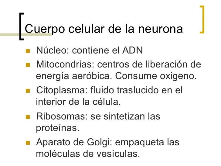 Axón de la neuronan   Los axónes terminan en botones sinápticos.n   Los axones varían en longitud y diámetro, a mayor ...
