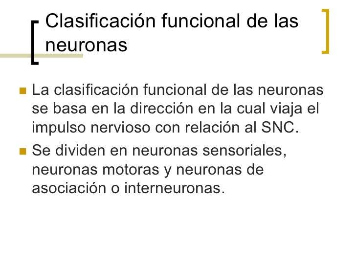 Neuronas de Asociaciónn Se les conoce como interneuronas.n Las interneuronas se encuentran entre las    neuronas senso...