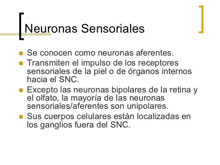 Sinapsis de la neuronan   Puntos de comunicación entre la neurona y otras      células (ya sean neuronas, músculos, etc....