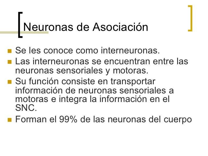 Sinápsis Eléctrica1. Es rara y requiere de una estructura   anatómica- conexón o ventrículo   celular.2. Transmisión más r...