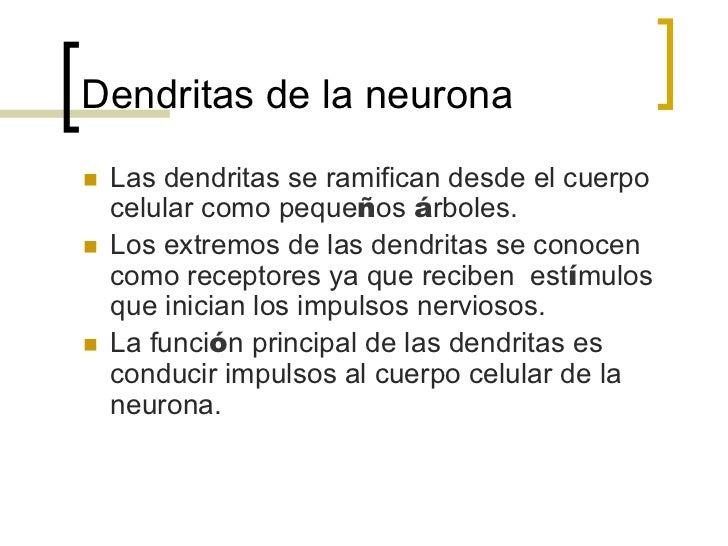 Cuerpo celular de la neuronan   El cuerpo celular de la neurona es la parte mayor.n   Se parece a la célula básica.n...