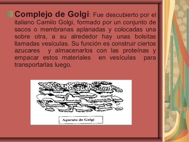 Complejo de Golgi: Fue descubierto por elitaliano Camilo Golgi, formado por un conjunto desacos o membranas aplanadas y co...