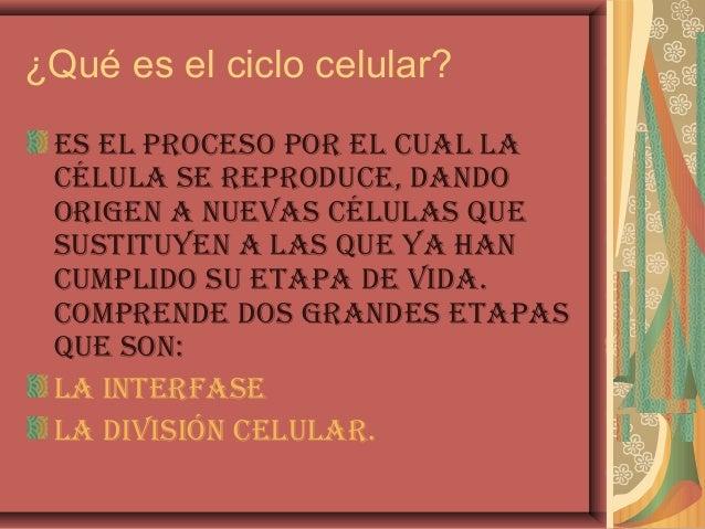 ¿Qué es el ciclo celular?Es El proCEso por El Cual laCélula sE rEproduCE, dandoorigEn a nuEvas Células quEsustituyEn a las...