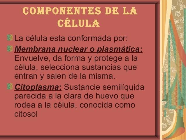 componentes de LacéLuLaLa célula esta conformada por:Membrana nuclear o plasmática:Envuelve, da forma y protege a lacélula...