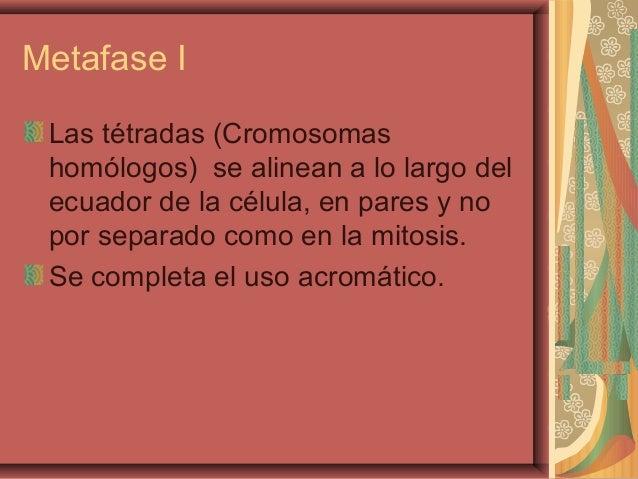 Metafase ILas tétradas (Cromosomashomólogos) se alinean a lo largo delecuador de la célula, en pares y nopor separado como...