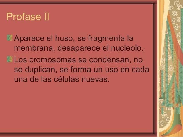 Profase IIAparece el huso, se fragmenta lamembrana, desaparece el nucleolo.Los cromosomas se condensan, nose duplican, se ...