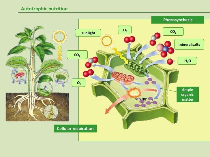 proceso anabolico y catabolico de los lipidos