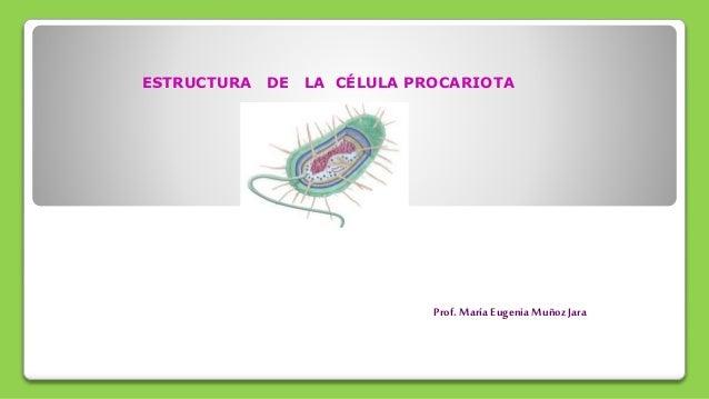Estructura Celula Procariota Octavo