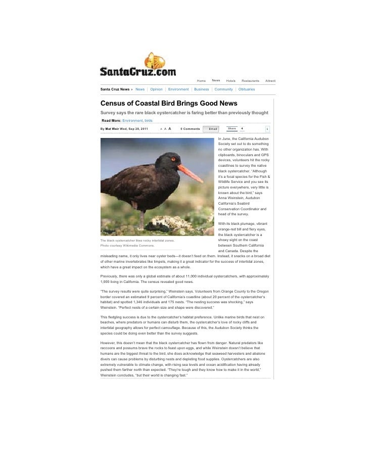 Census of Coastal Bird Brings Good News - Santa Cruz News                                                                 ...