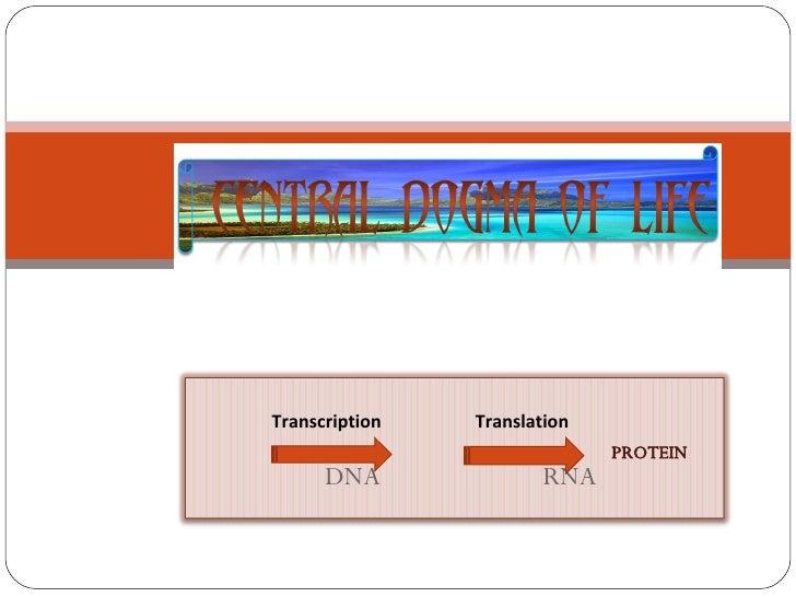 PROTEIN Transcription  Translation  DNA  RNA