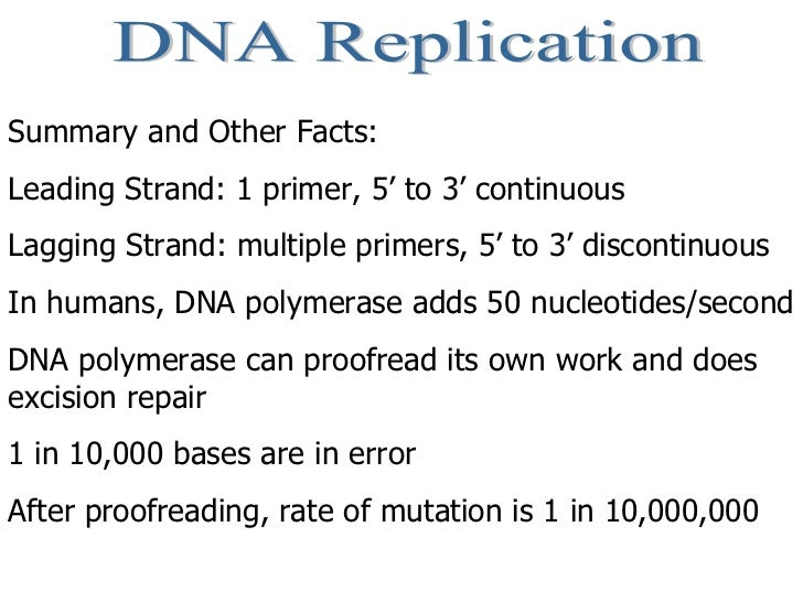 DNA Replication Summary and Other Facts: Leading Strand: 1 primer, 5' to 3' continuous Lagging Strand: multiple primers, 5...