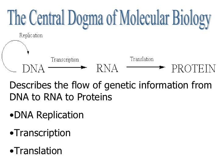 what is the central dogma of protein synthesis