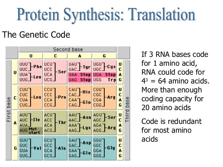 genetic code and protein synthesis