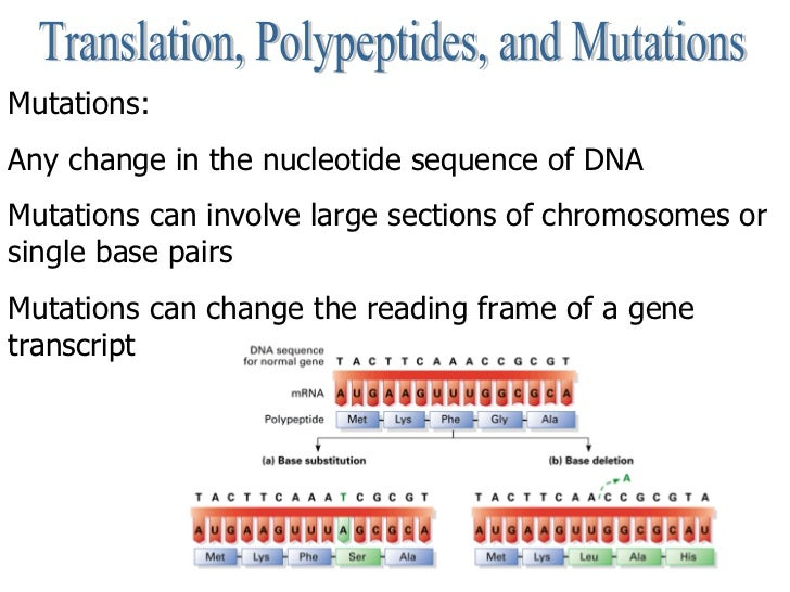 Translation, Polypeptides, and Mutations Mutations:  Any change in the nucleotide sequence of DNA Mutations can involve la...