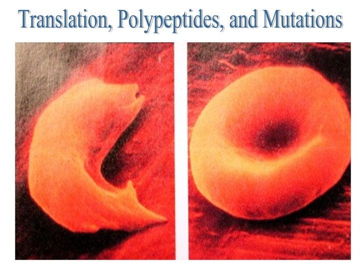 Translation, Polypeptides, and Mutations