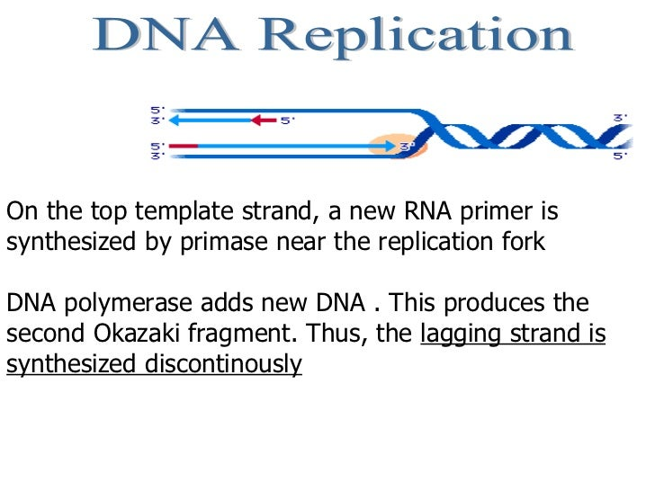 DNA Replication On the top template strand, a new RNA primer is synthesized by primase near the replication fork  DNA poly...