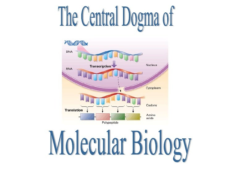 The Central Dogma of  Molecular Biology                                                                                   ...