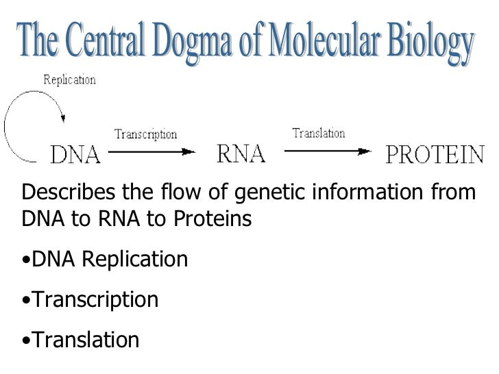 Dna And Replication Worksheet Answers 004 - Dna And Replication Worksheet Answers