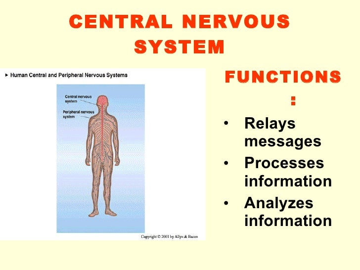 Central Nervous System 09 10