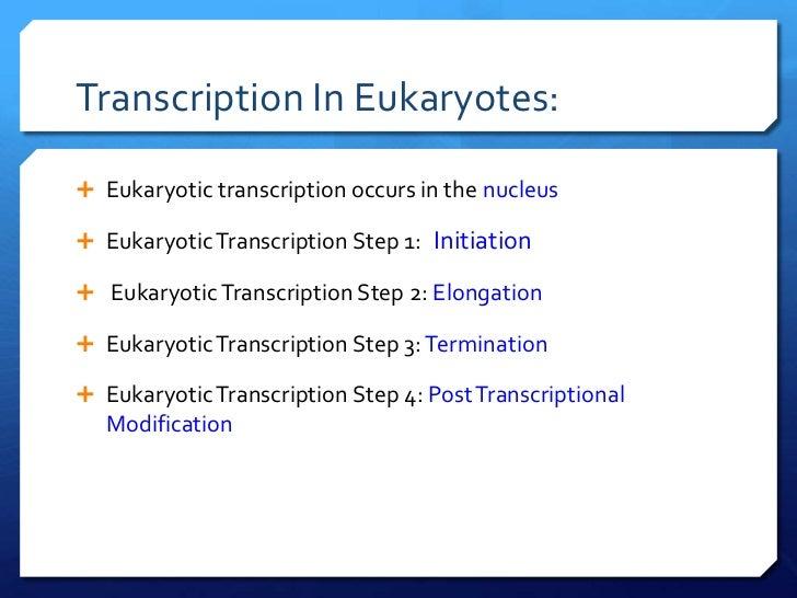 Central Dogma And Transcription Slides