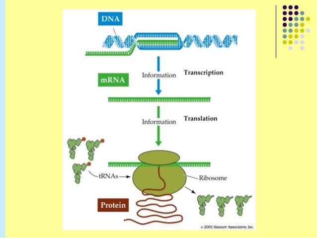 central dogma of molecular biology pdf