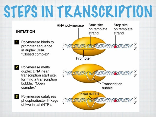 Lecture on DNA to Proteins (The Central Dogma of Molecular ...