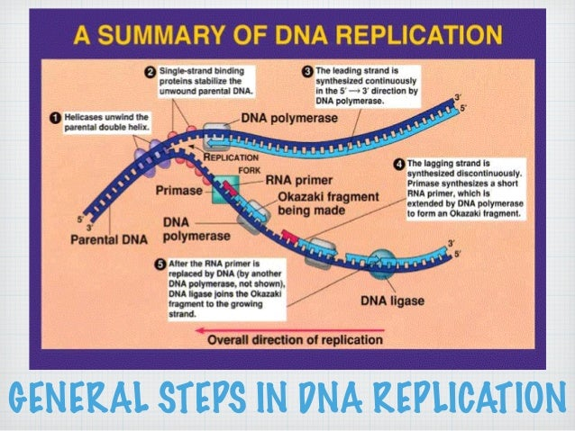 Lecture on DNA to Proteins (The Central Dogma of Molecular Biology)