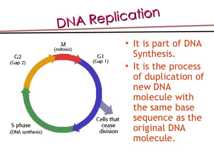 Central Dogma Of Molecular Genetics Valerio
