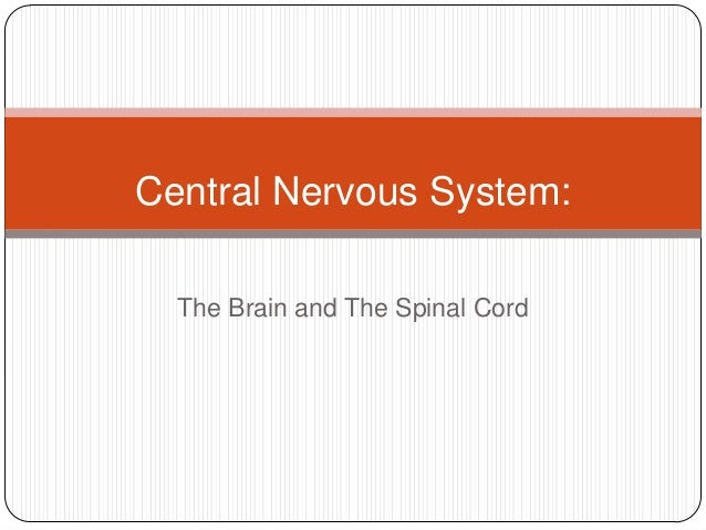Central Nervous System:  The Brain and The Spinal Cord