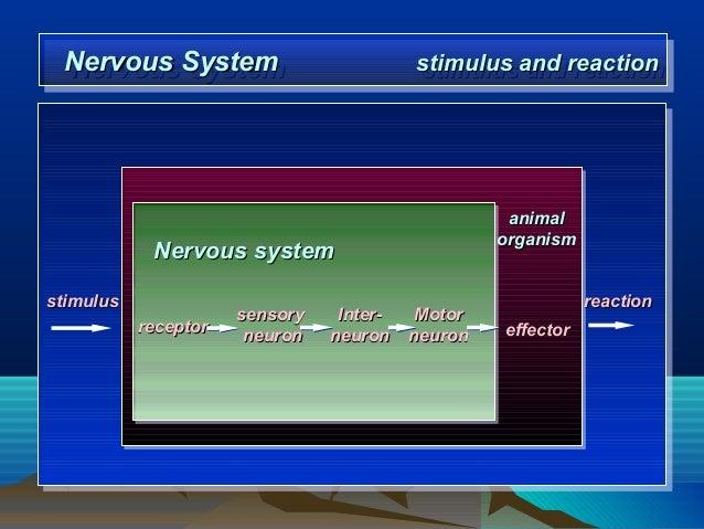 Motor Neuron Excitability Define Motor Neuron Impremedia Net Bio201 Nervous Tissue Science 101