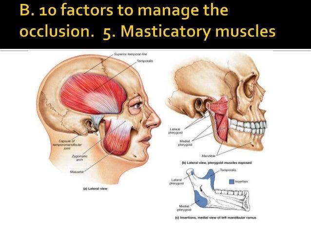 centric occlusion 15