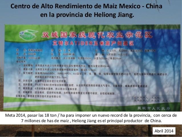 Centro de Alto Rendimiento de Maiz Mexico - China en la provincia de Heliong Jiang. Meta 2014, pasar las 18 ton / ha para ...