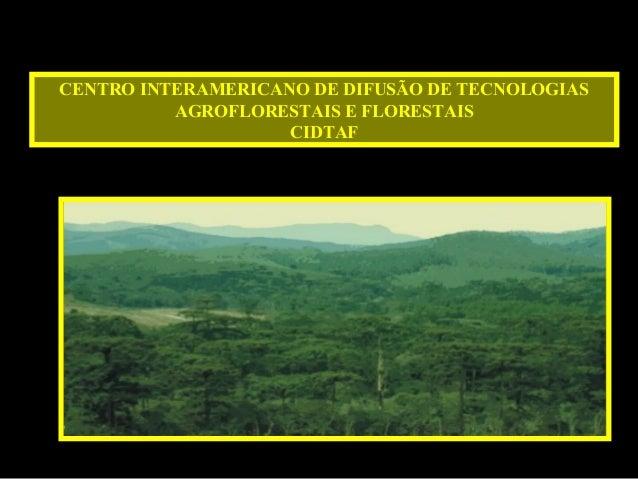 CENTRO INTERAMERICANO DE DIFUSÃO DE TECNOLOGIASAGROFLORESTAIS E FLORESTAISCIDTAF