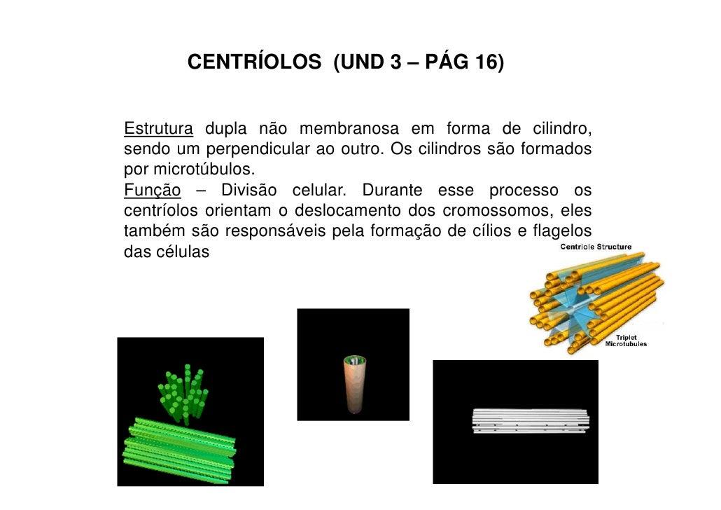 CENTRÍOLOS (UND 3 – PÁG 16)Estrutura dupla não membranosa em forma de cilindro,sendo um perpendicular ao outro. Os cilindr...