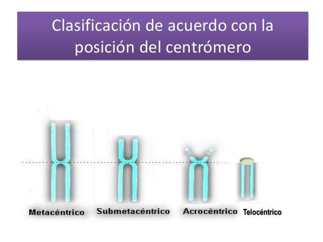 Centromero Slide 3