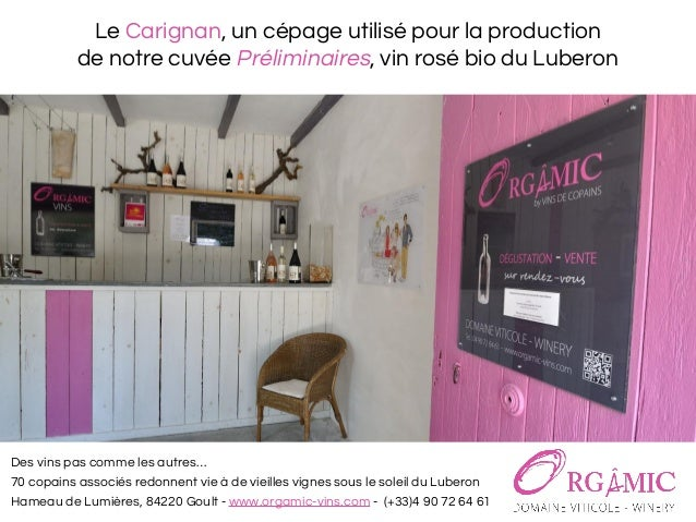 Le Carignan, un cépage utilisé pour la production de notre cuvée Préliminaires, vin rosé bio du Luberon Des vins pas comme...