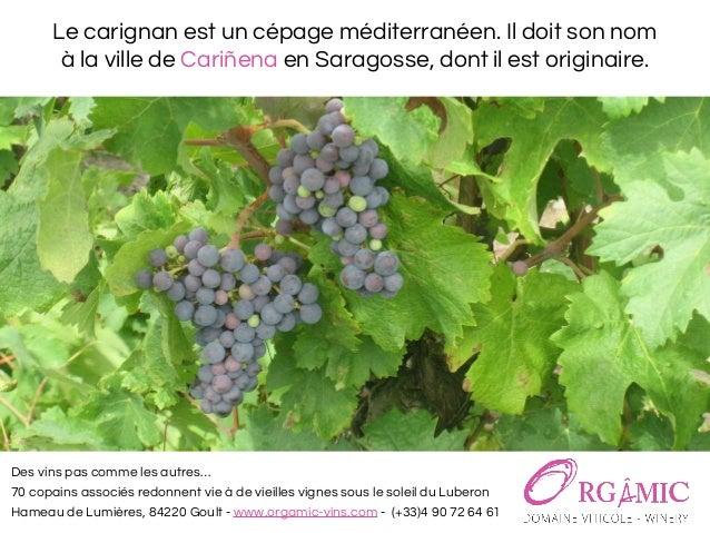 Le carignan, cépage pour un vin rosé bio du luberon - Domaine viticole Orgâmic Slide 2
