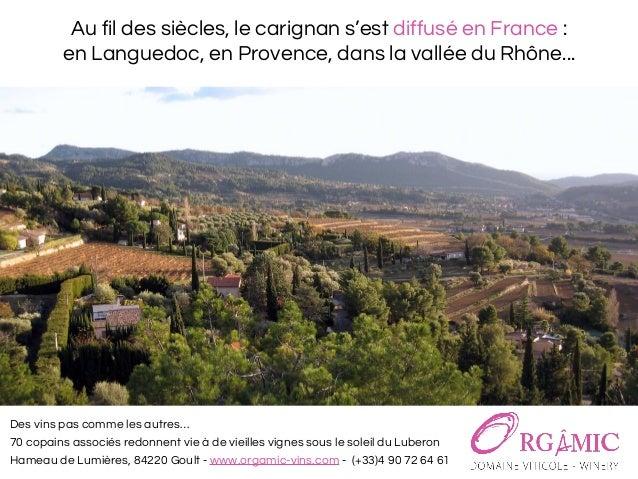 Le carignan, cépage pour un vin rosé bio du luberon - Domaine viticole Orgâmic Slide 3