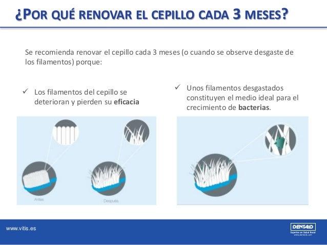 www.vitis.es ¿POR QUÉ RENOVAR EL CEPILLO CADA 3 MESES? Se recomienda renovar el cepillo cada 3 meses (o cuando se observe ...