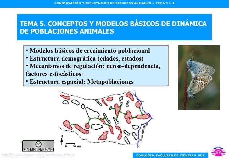 TEMA 5. CONCEPTOS Y MODELOS BÁSICOS DE DINÁMICA DE POBLACIONES ANIMALES <ul><li>Modelos básicos de crecimiento poblacional...