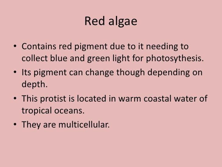 Algae, Phytoplankton and Chlorophyll