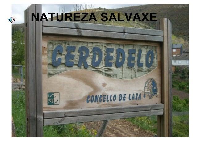 NATUREZA SALVAXE