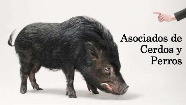Asociados de Cerdos y Perros