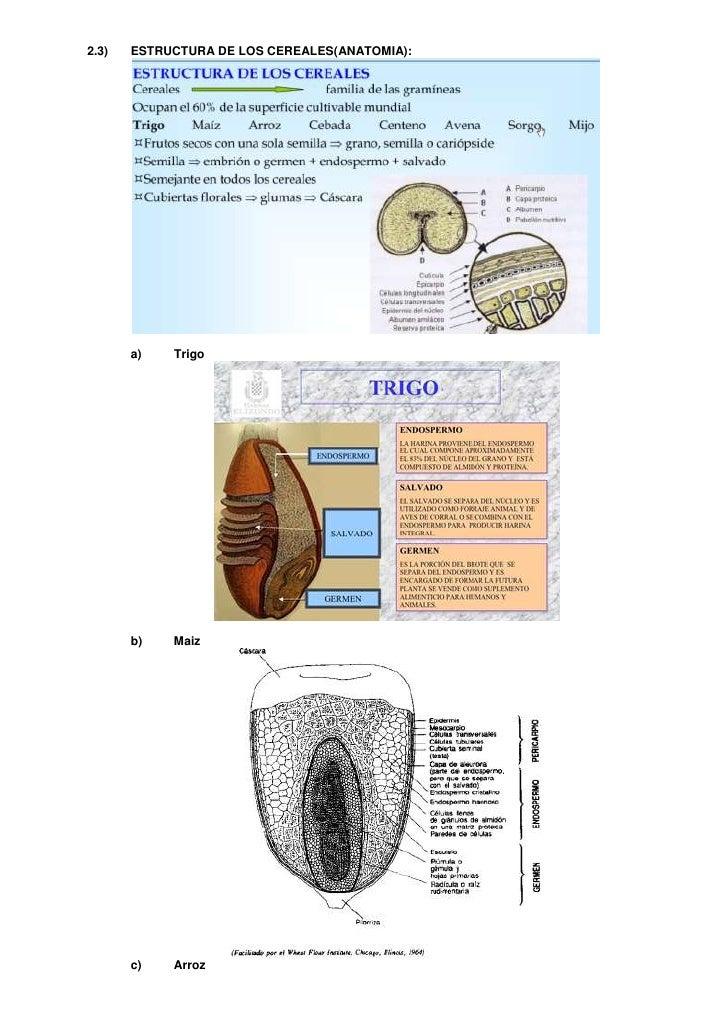 Encantador Anatomía De Arroz Galería - Imágenes de Anatomía Humana ...